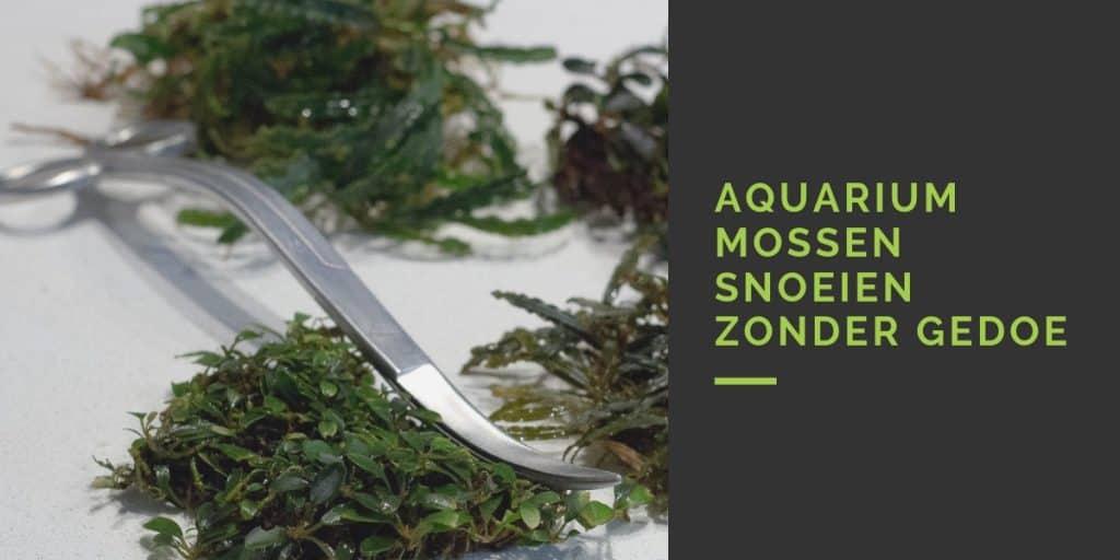 Aquariummos snoeien