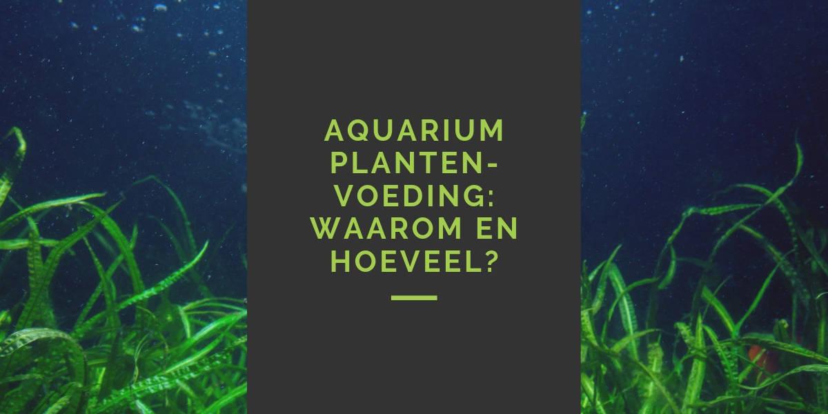 Hoeveel aquarium plantenvoeding