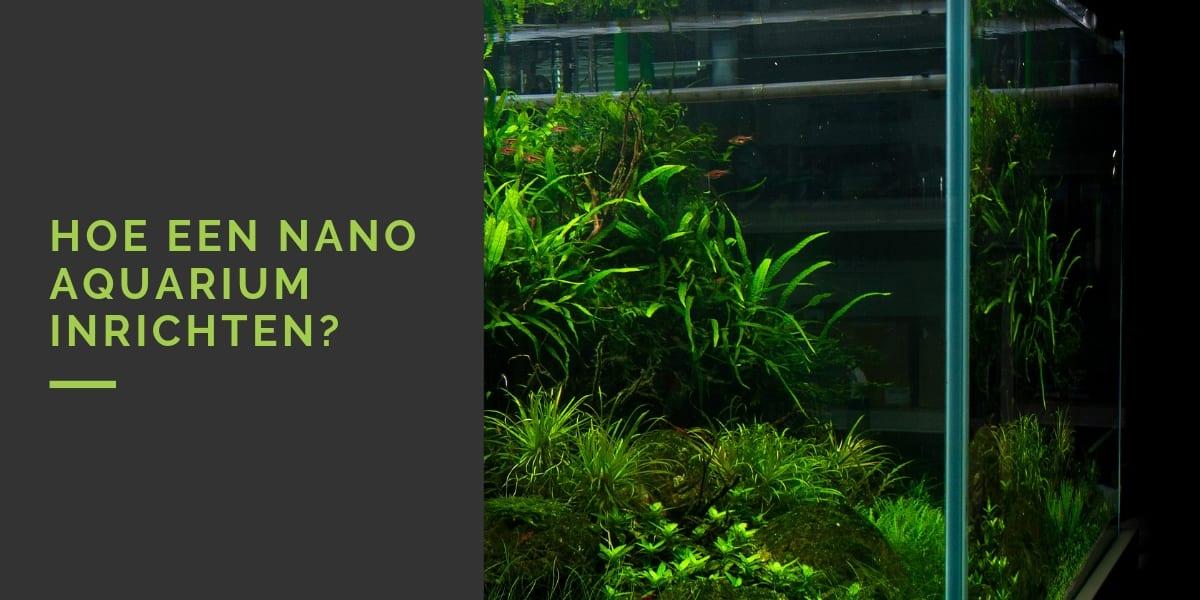 Nano aquarium inrichten