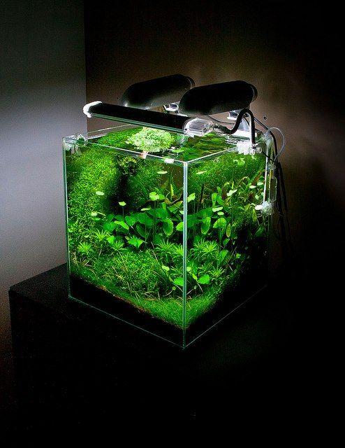 Aquarium beginnen? 5 beginnersfoutjes die je gemakkelijk kan voorkomen | PlantedBox