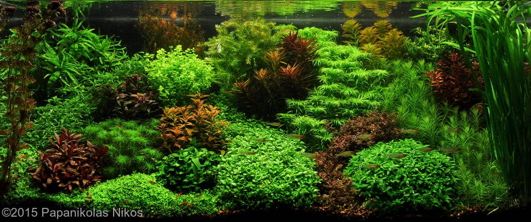aquarium veel licht