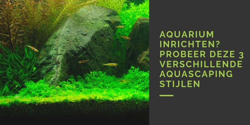 3 verschillende aquascaping stijlen
