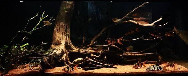 biotoop aquarium