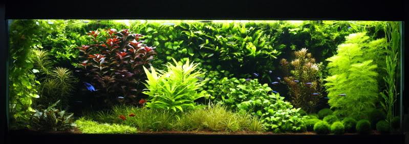 nederlands aquarium straatje