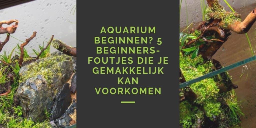 Beginnersfouten aquarium