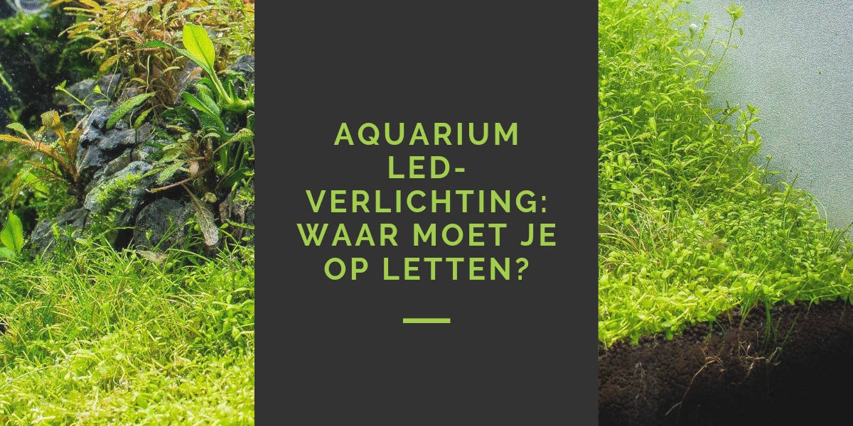 LED-verlichting in aquarium