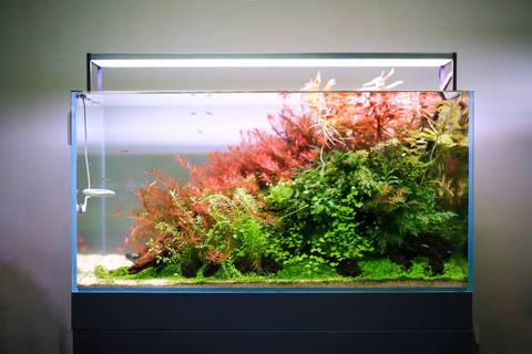 Aquarium LED-verlichting: waar moet je op letten? | PlantedBox