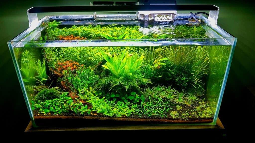 Baardalg bestrijden in je aquarium: een uitgebreid stappenplan | PlantedBox