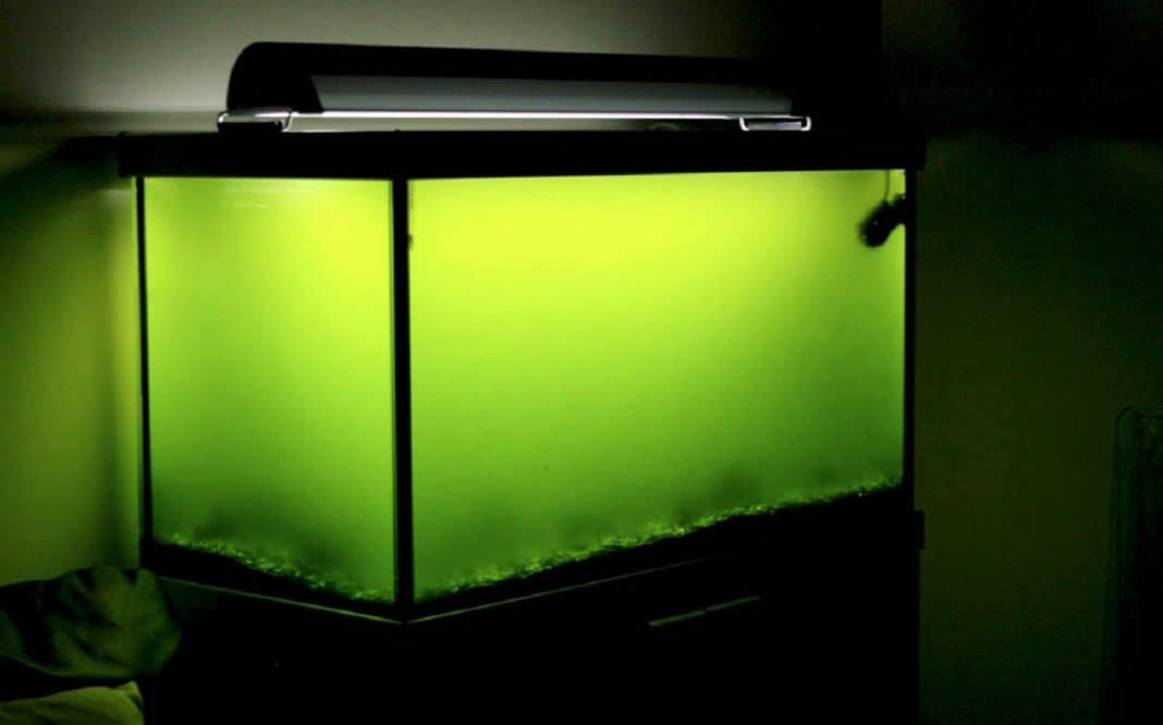 zweefalg aquarium