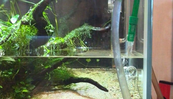 waterverversing aquarium