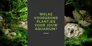voorgrondplanten aquarium