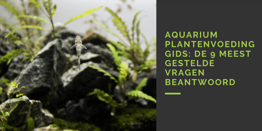 aquarium plantenvoeding gids