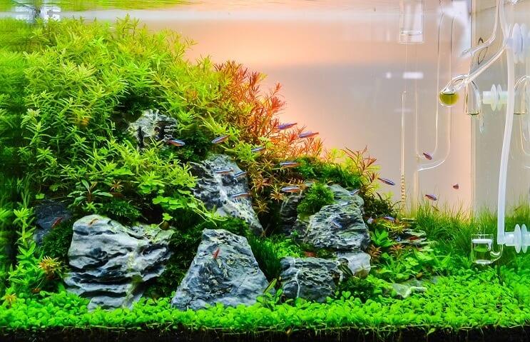 aquarium plantenvoeding nodig