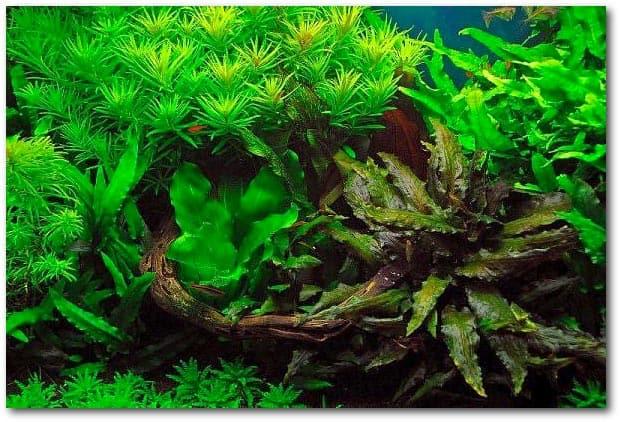 nitraat en fosfaat in het aquarium