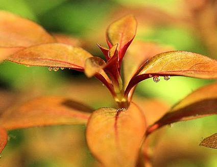 opname door bladeren aquariumplant