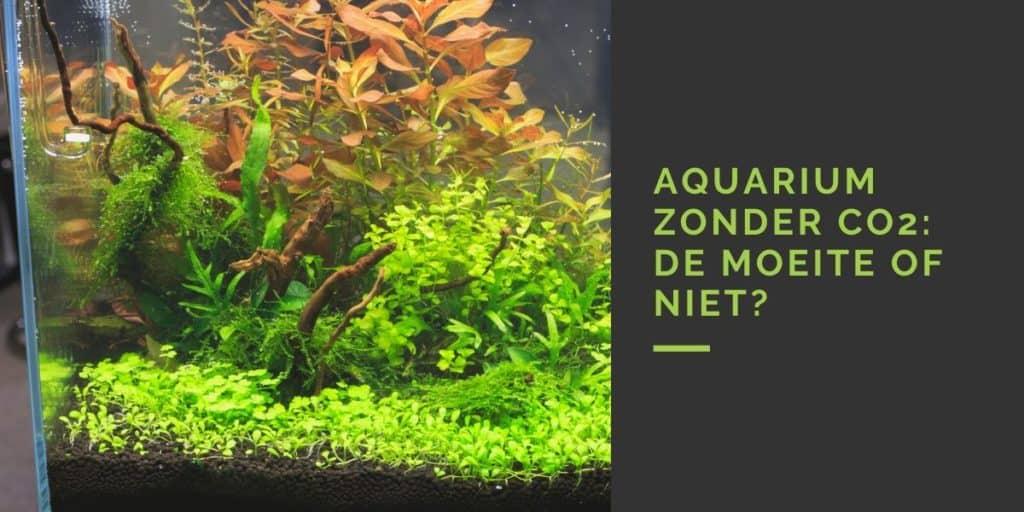 Aquarium zonder CO2: de moeite of niet?
