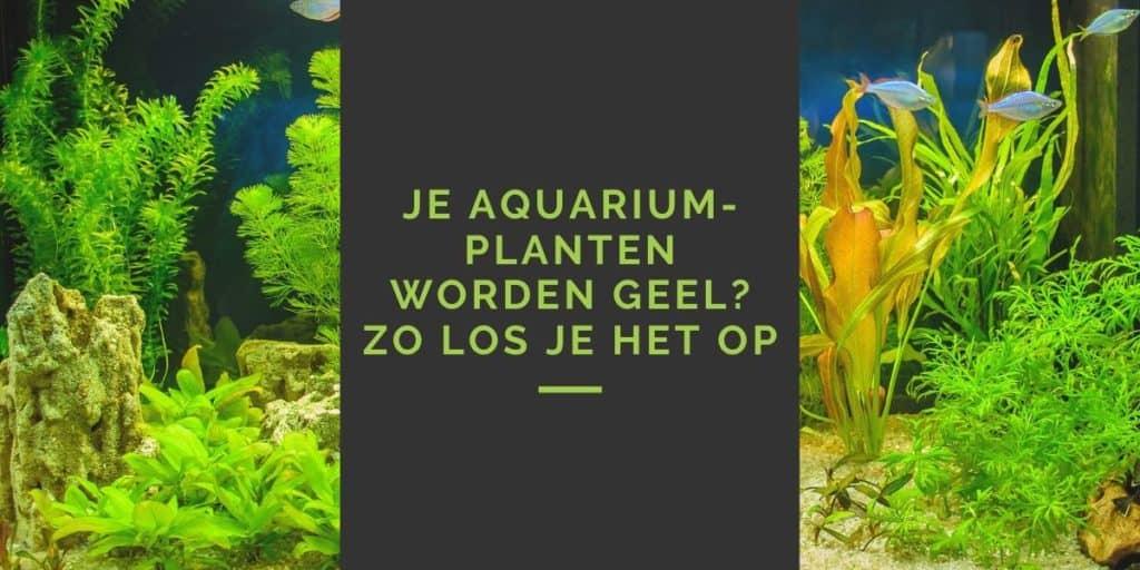 Je aquariumplanten worden geel? Zo los je het op