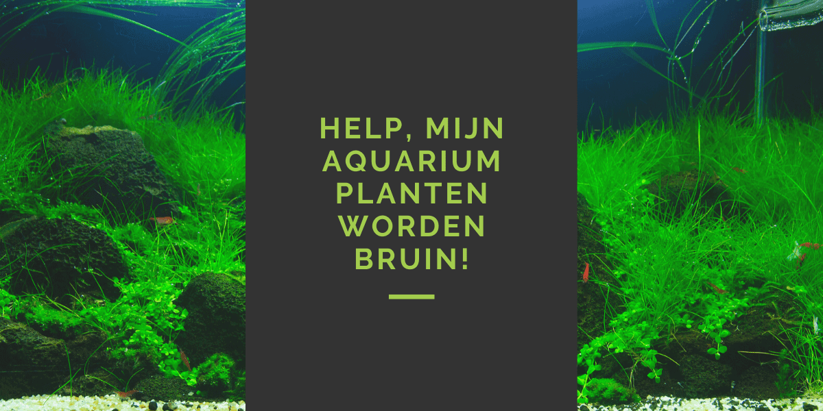 aquariumplanten worden bruin