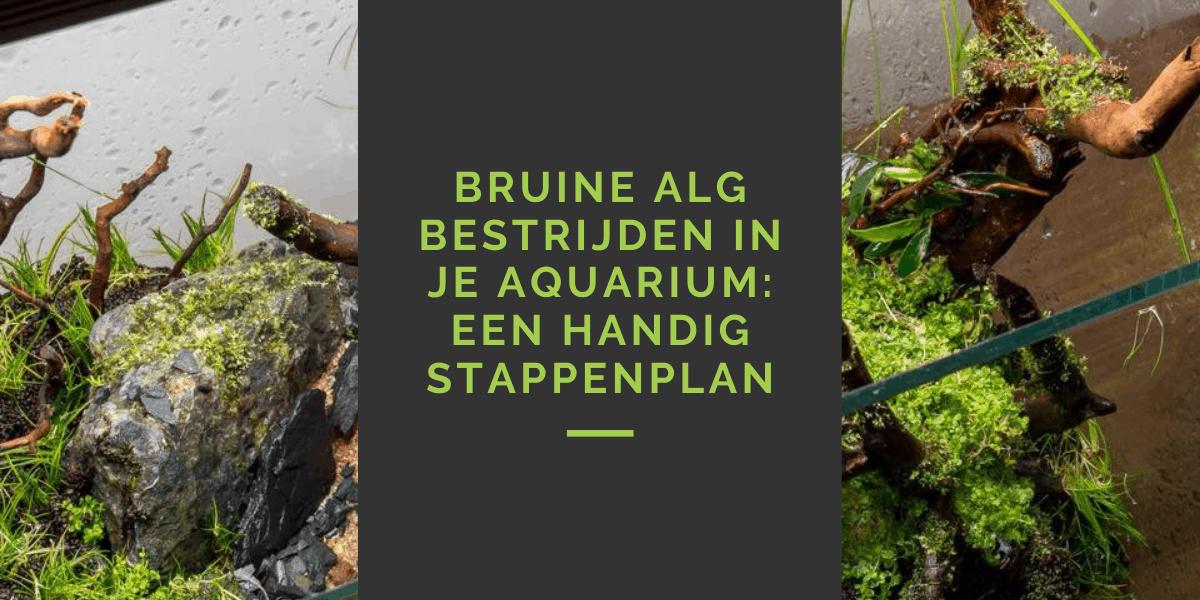 bruine alg aquarium bestrijden